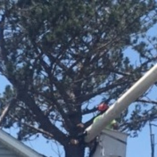 Tree Trimming in Woodward, OK